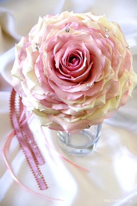 rosemellia1ko.jpg