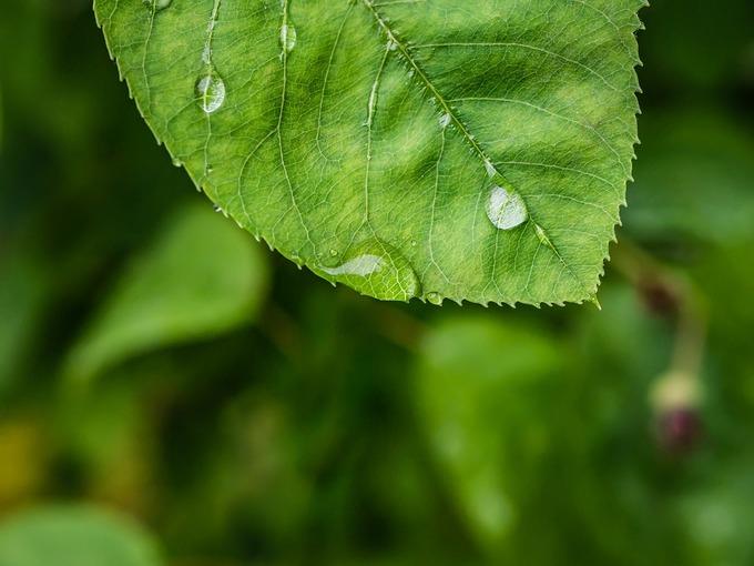ブログ用 雨.jpg