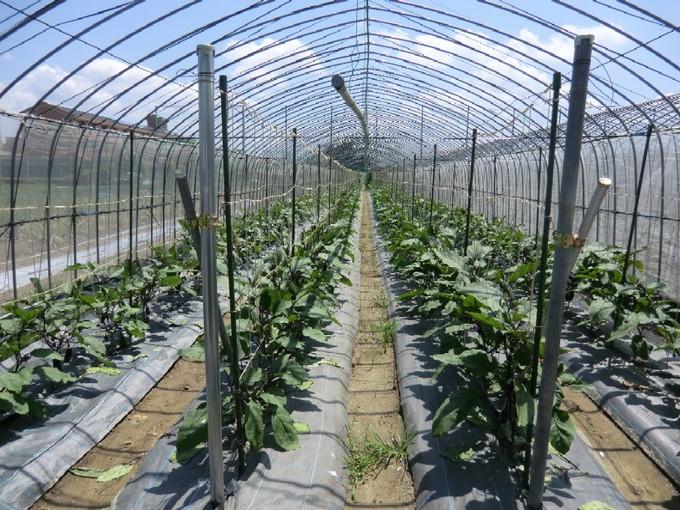 農園 002.jpg